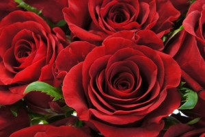薔薇の花言葉本数