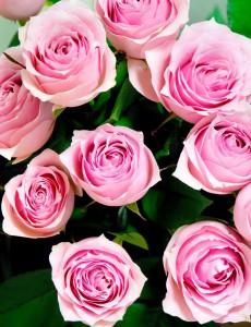 薔薇の花言葉本数5
