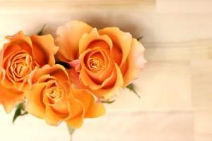 薔薇の花言葉本数6
